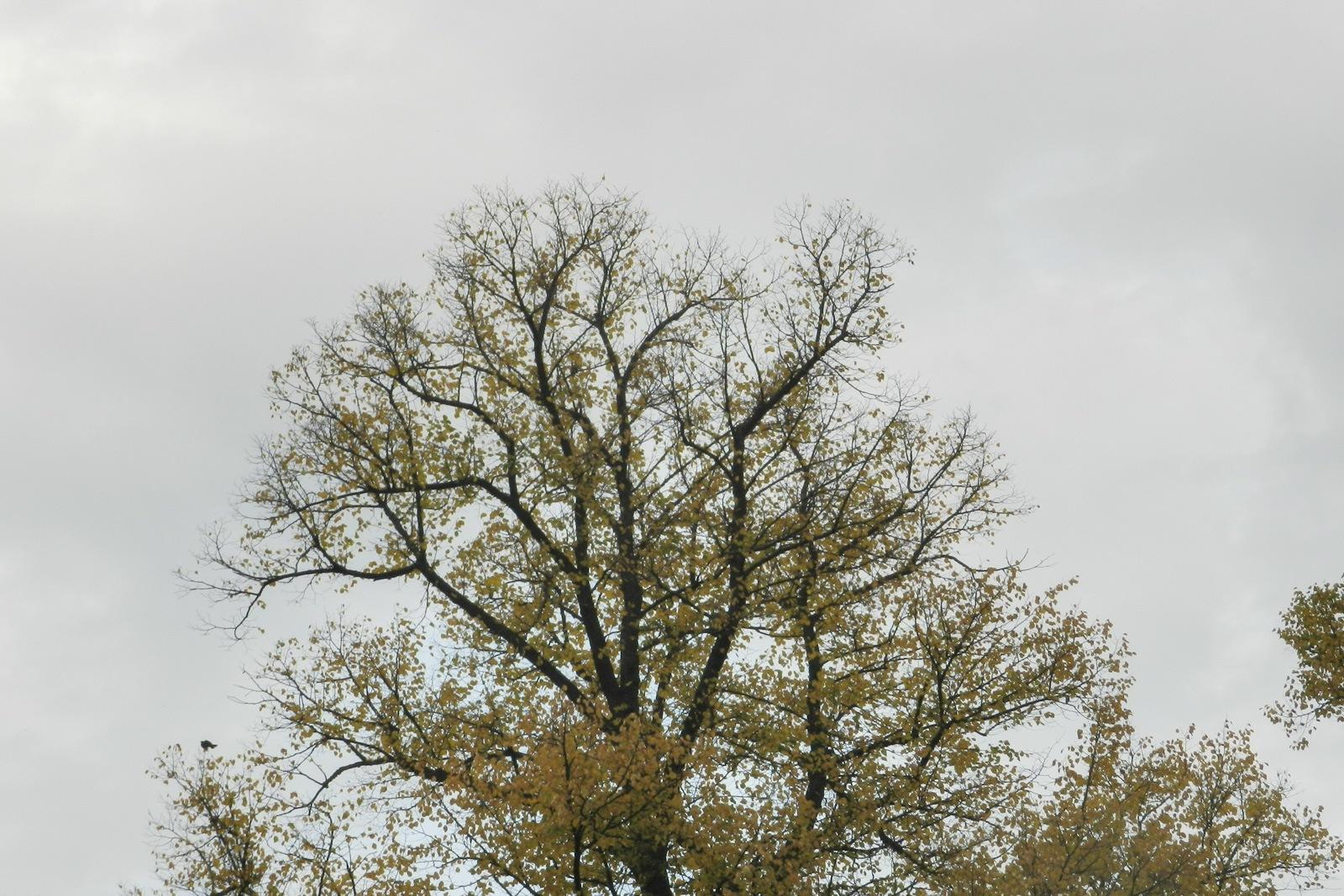 nijmegen-valkhofpark-08